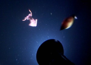 Squid Attack! Two squid rocket toward starboard light