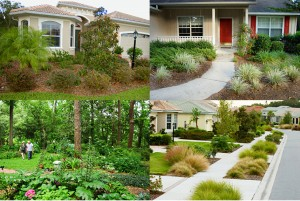 Landscaping with Native Vegetation in Florida (Source:  FloridaYards.org)
