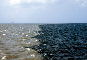 A dead zone the size of the state of New Jersey lies in the Gulf   of Mexico near the mouth of the Mississippi River