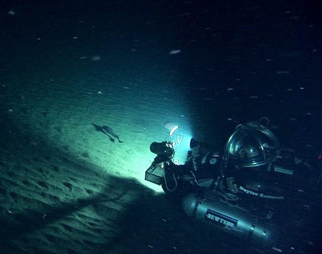 DeepWorker 6 filming Giant grenadier (Albatrossia pectoralis)