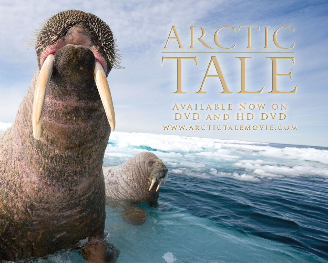 Arctic Tale - Adam Ravetch