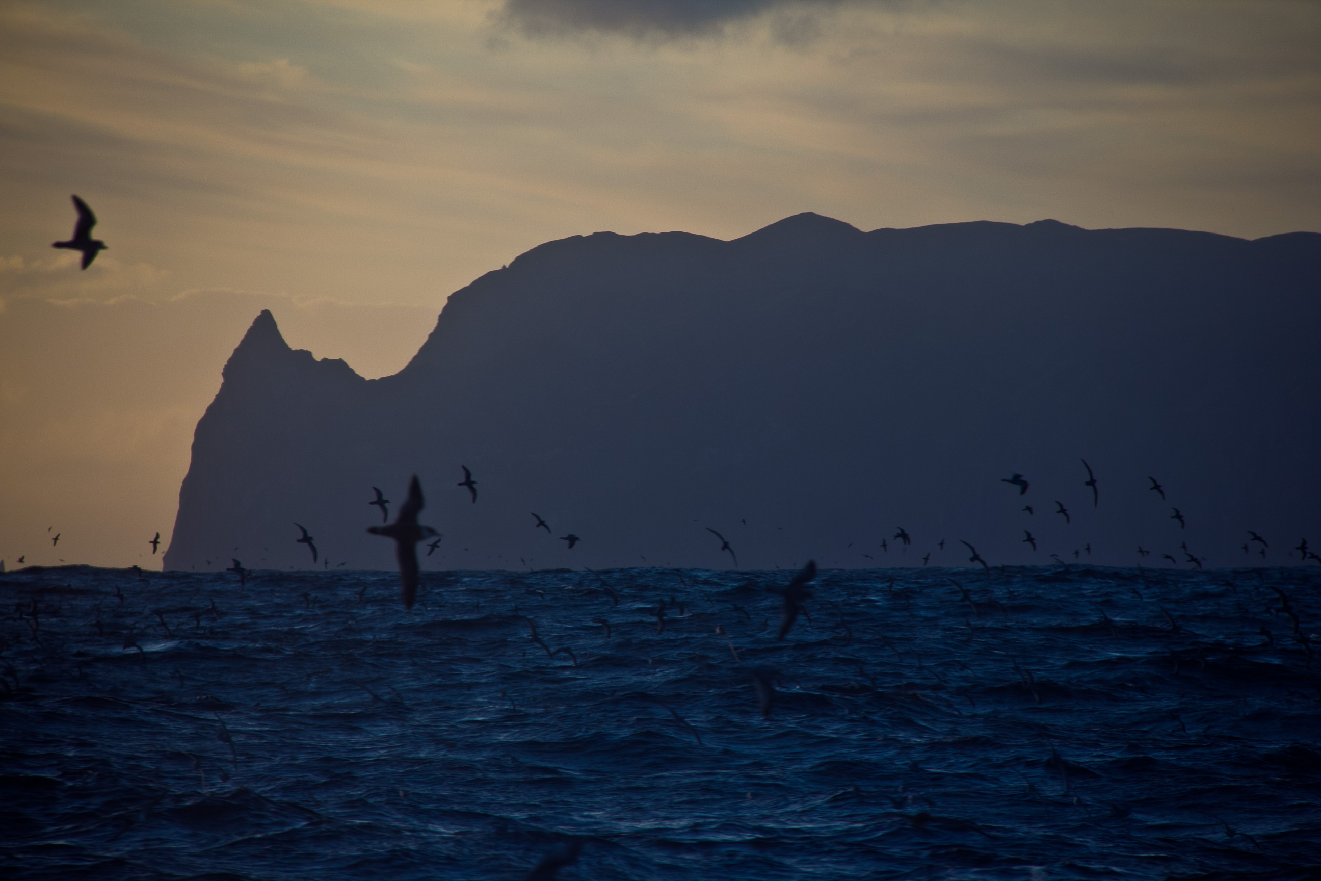 "The oil spill from the wreck of the ""Oliva"" has now reached Inaccessible Island, a World Heritage Site and home to one of the world's most important concentrations of seabirds"