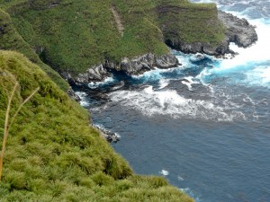 View from the top of Nightingale Island (Photo: Trevor Glass, Tristan de Cunha Conservation Department)