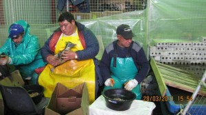 Rescue team feeding oiled Northern Rockhopper penguins
