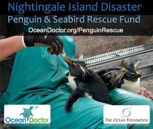 Nightingale Island Disaster Penguin & Seabird Rescue Fund
