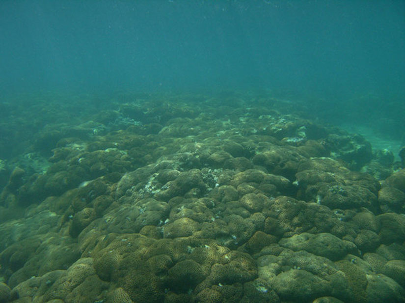 Researchers have discovered the world's northermost coral reefs off Japan's Tsushima Island (Image: Kaoru Sugihara)