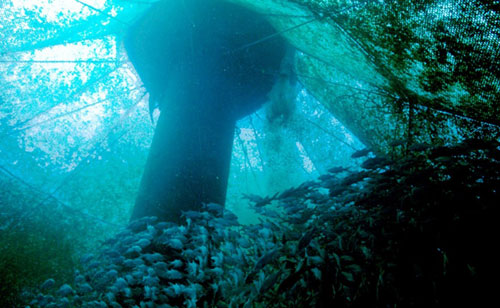 Interior of offshore fish farm (Source: NOAA)