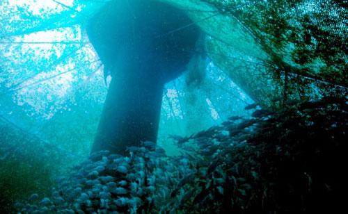 Interior of offshore fish farm (Source: NOAA)