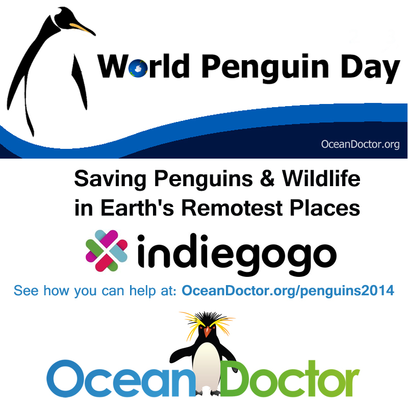 World Penguin Day 2014