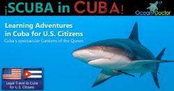 Scuba-in-Cuba_shark_w250