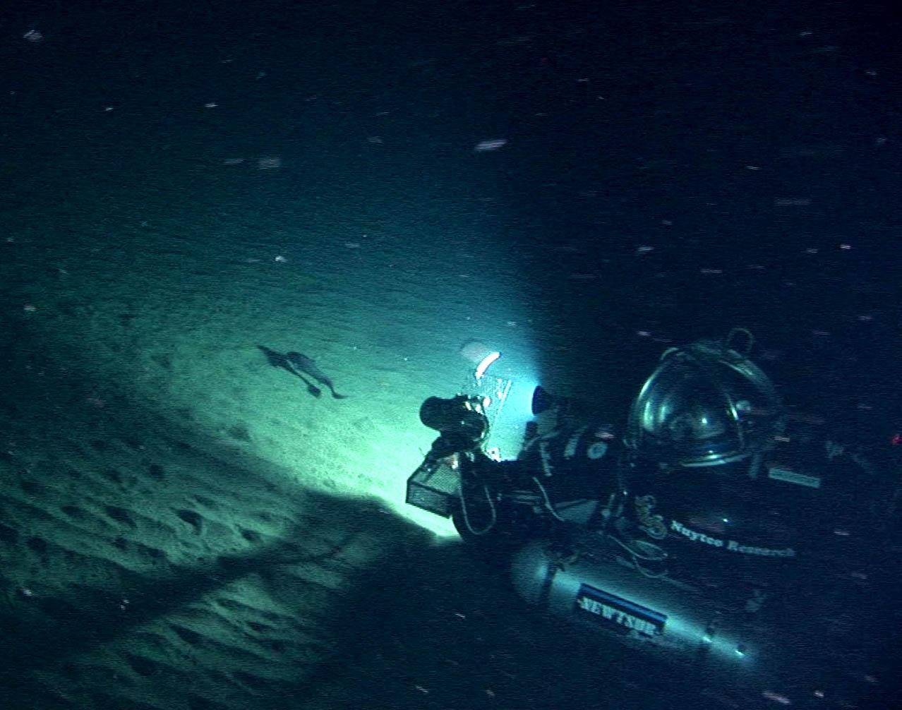 Deepworker submersible filming grenadier at bottom of Bering Sea, Alaska