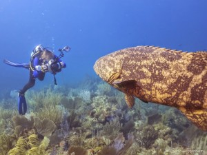 Goliath Grouper and Photographer