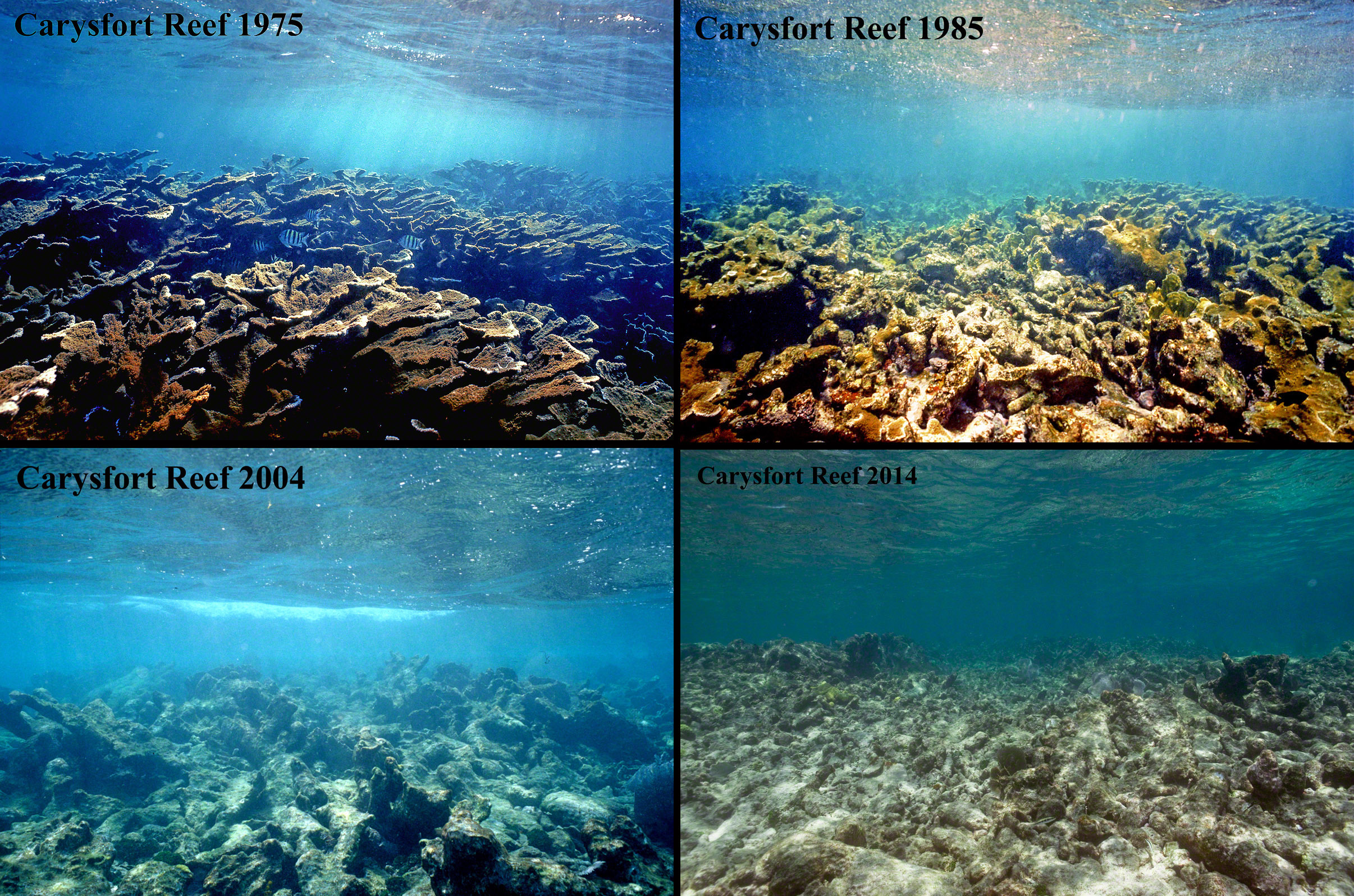 Carysfort Reef 1975 to 2014