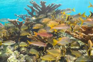 Cuba's healthy coral reefs
