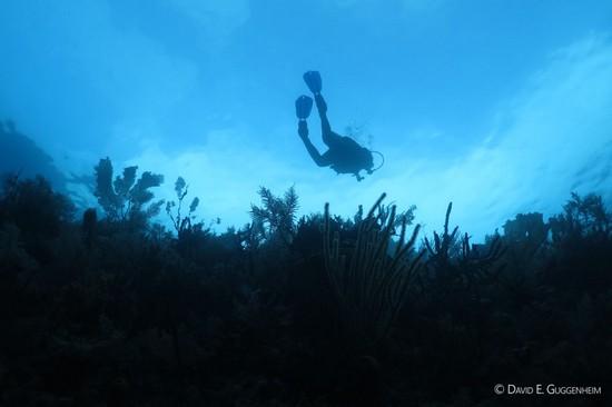 Ocean Doctor diver in Cuba