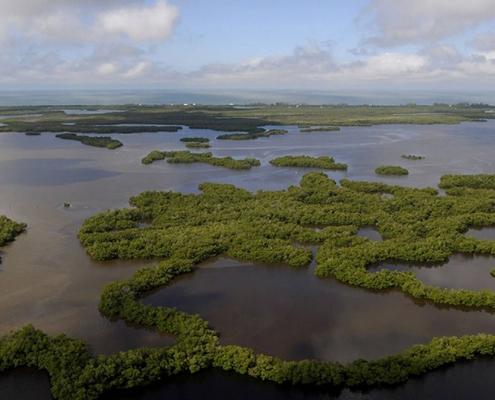 Rookery Bay National Estuarine Research Reserve - Naples, Florida